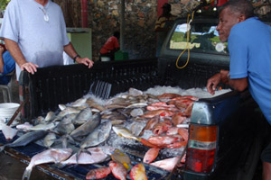 cyguatera-fish-poisoning-feature